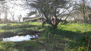 Orchard at Pentire, North Cornwall Coast