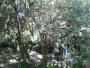 Pagan ritual tree with ribbons