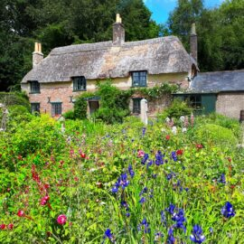 View of Thomas Hardy's cottage across flower beds