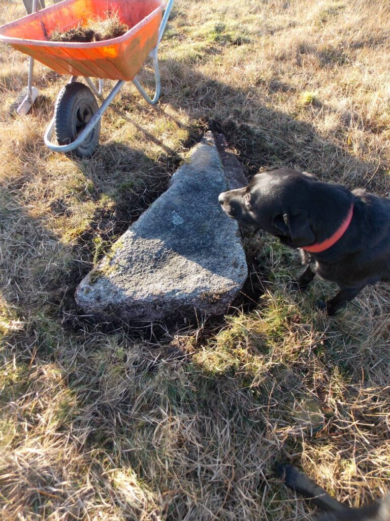 Mystery dog looks at a stone from a circle, uncovered on Bodmin Moor